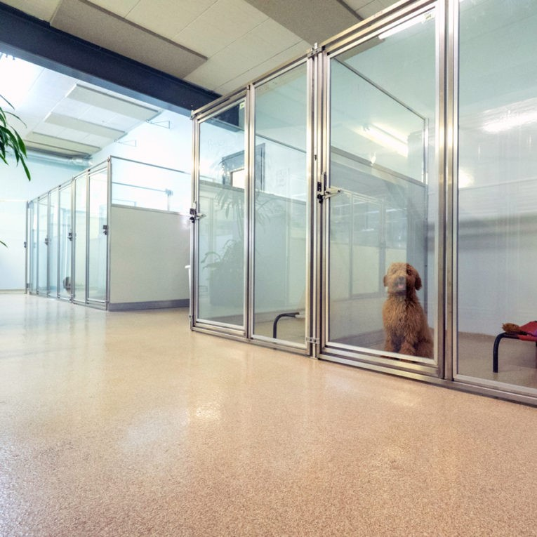 Dog boarding suites at Uptown Pup