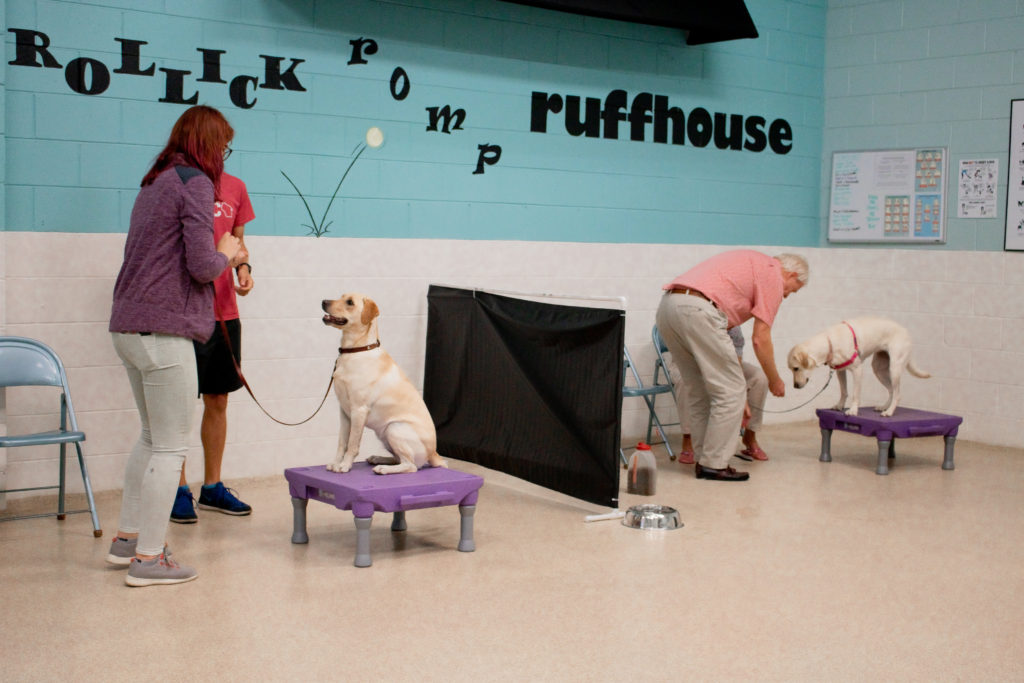A group dog training class at Uptown Pup