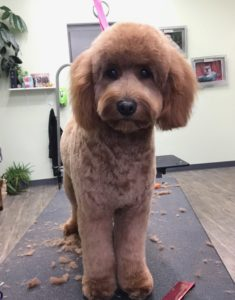 Dog grooming at Uptown Pup