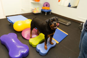 Canine fitness training for strength and agility
