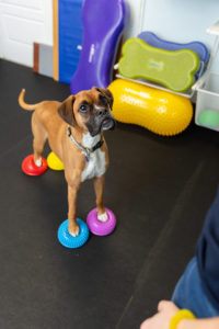 Canine fitness training for balance